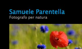 Samuele Parentella
